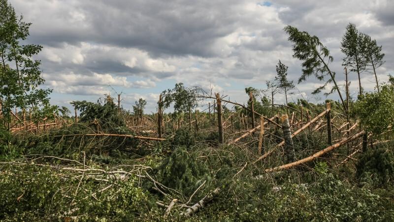 Copaci rupti in Polonia