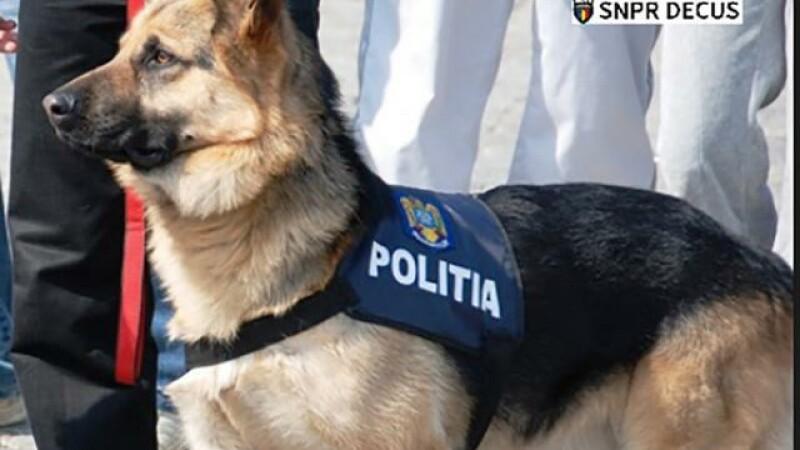 câine polițist