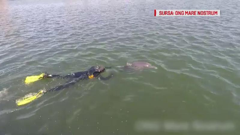 Delfin cu înotătoarele prinse într-un fir de pescuit, salvat la limită. Starea în care se află