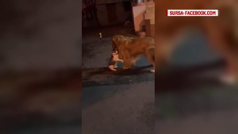 Un câine intervine în bătaia dintre două pisici. Filmarea care face senzație pe internet