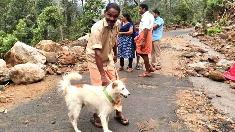 câine India
