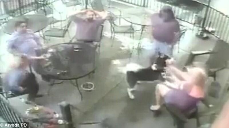 Tânără mușcată de față de un câine din rasa Husky. Momentul, surprins de camere. VIDEO