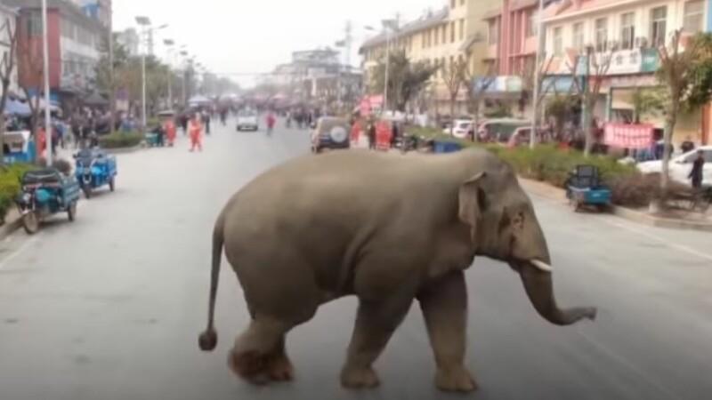 elefanţi sălbatici în China