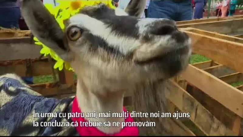 concurs capre