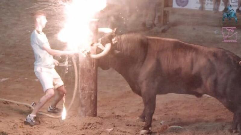 Taur legat de un stâlp și cu coarnele în flăcări, la un festival spaniol. Ce a urmat