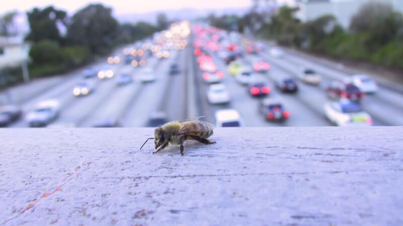 Clipe de coșmar pentru un șofer atacat de un roi de albine. VIDEO