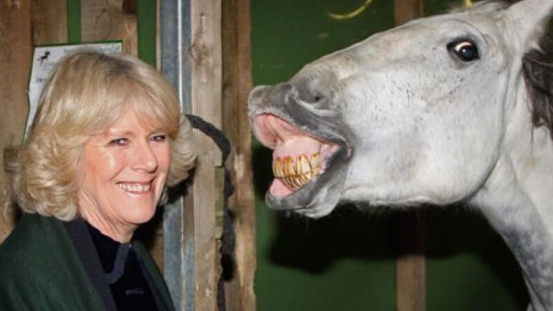 Camilla si calul fericit