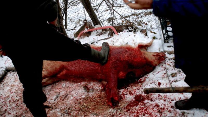 Porc de Ignat