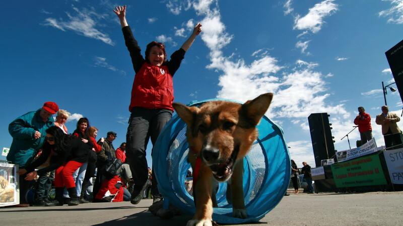 Organizatia Vier Pfoten sustine o demonstratie de dresaj cu caini comunitari, in cadrul evenimentului