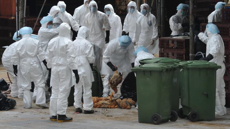 Stare de alerta sanitar-veterinara in Bihor, din cauza gripei aviare din Ungaria. Lucrurile interzise localnicilor