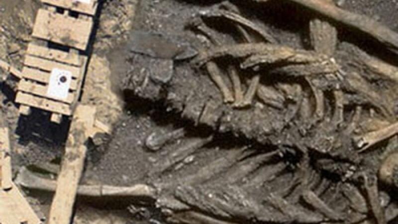 Scheletul unui animal bizar, descris in mitologia asiatica, descoperit in Coreea de Nord