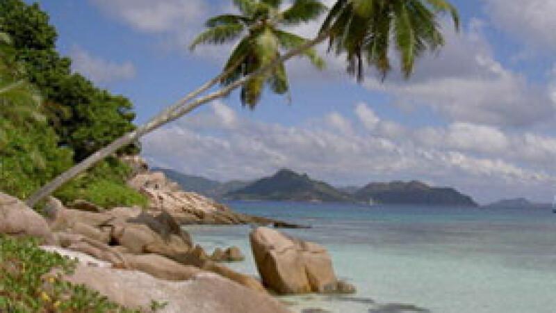 India, plaja exotica, palmieri