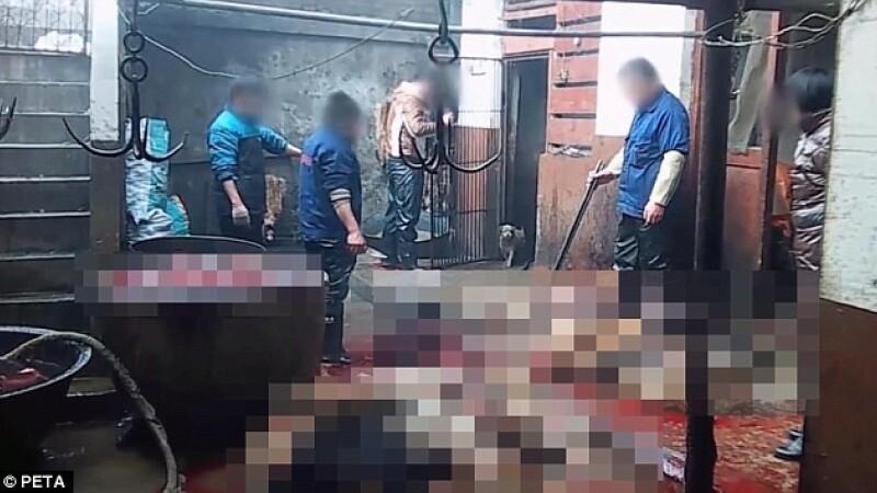 ATENTIE, VIDEO SOCANT! Imagini filmate in abatoarele de caini din China, unde patrupedele devin manusi si pantofi de lux