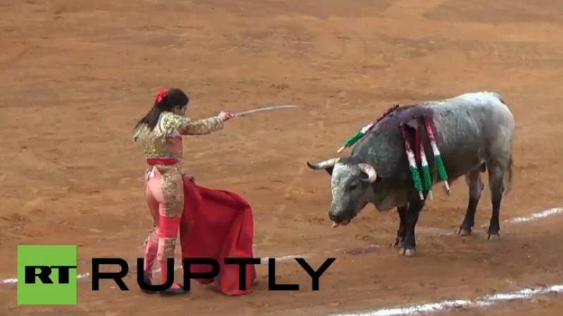 O femeie toreador a fost luata in coarne de un taur in timpul unei coride. Imagini cu impact emotional puternic. VIDEO