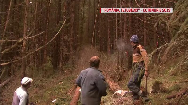 Urmatorul pas in lupta cu taierile ilegale de paduri. Alex Dima: \