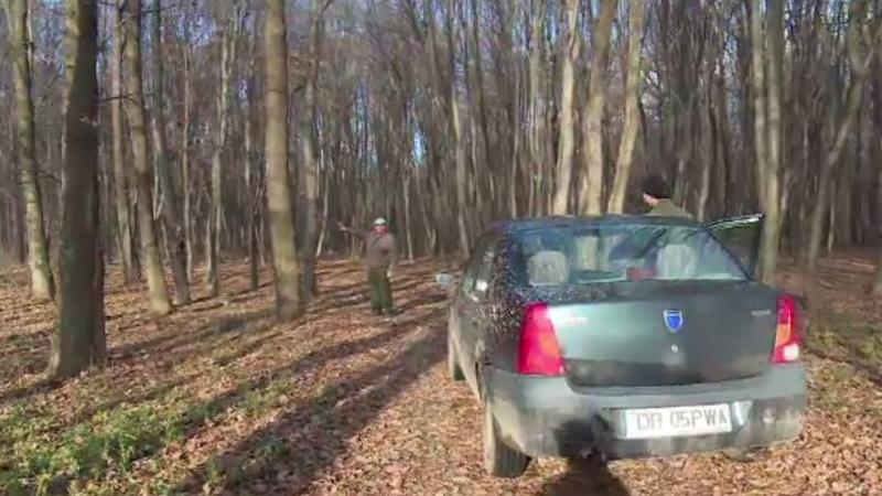 Pădurari din Dâmbovița, bătuți de doi indivizi prinși la furat de lemne