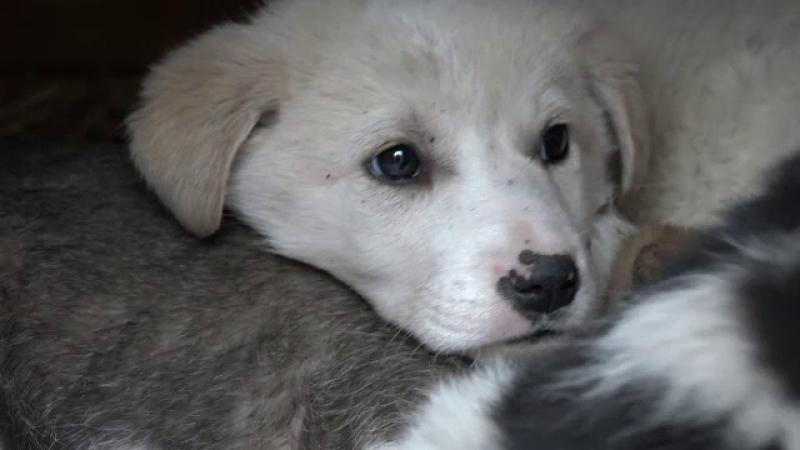 Câini adopție