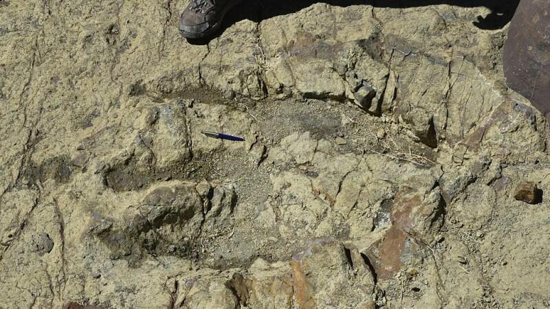 Amprentă de dinozaur veche de 115 milioane de ani, distrusă cu ciocanul
