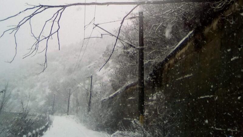 copac pe calea ferata