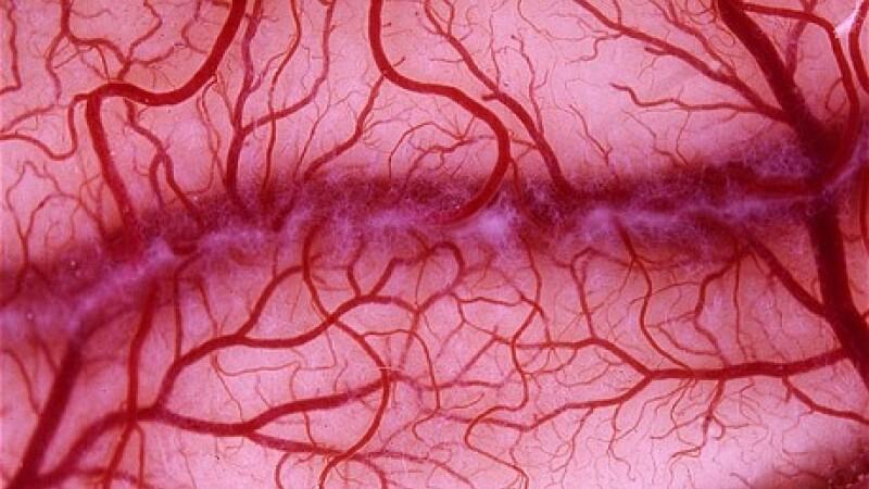 vase de sange uman