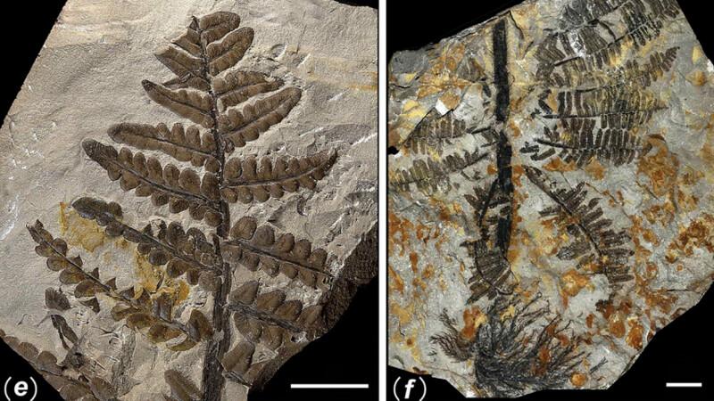Primele fotografii din padurea ingropata acum 298 de milioane de ani. Comoara ascunsa a Chinei