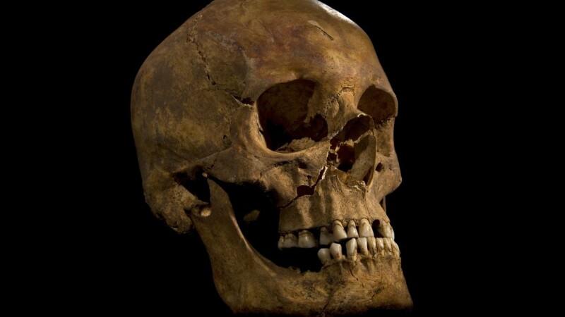craniu rege