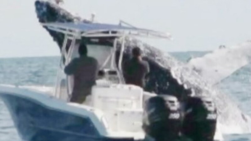 Momentul incredibil in care o balena de 40 de tone rastoarna o barca de pescuit. VIDEO