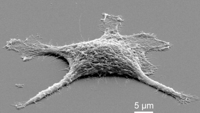 Cercetatorii au creat celule