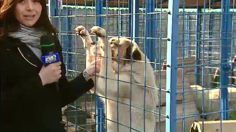 Adaposturi pentru cainii maidanezi