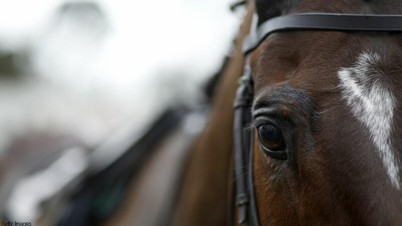 1.000 de lire drept daune pentru ca s-a pozat cu calul sau. Procesul intentate de o femeie din Marea Britanie