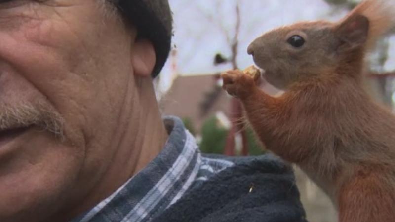 Prietenia neobisnuita dintre un polonez si o veverita gasita in padure. Pitek are propria ei camera