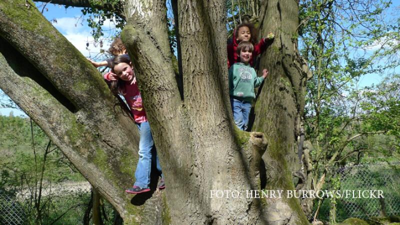 copii catarati in copac