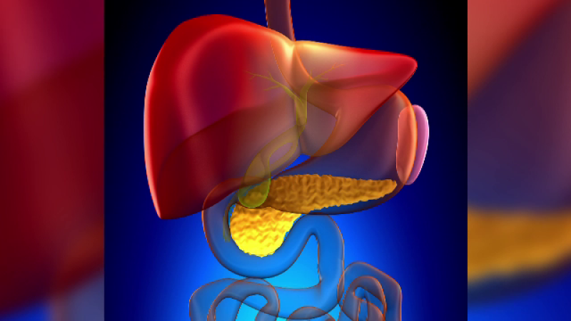 Pancreasul endocrin