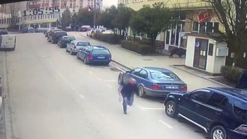 Două persoane duse la spital după ce au fost atacate de mistreţ, pe stradă, în Sălaj. VIDEO