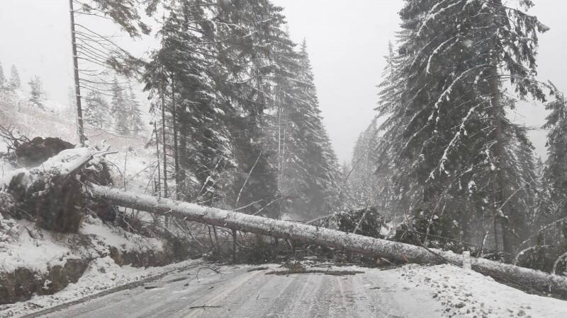 copac cazut pe sosea