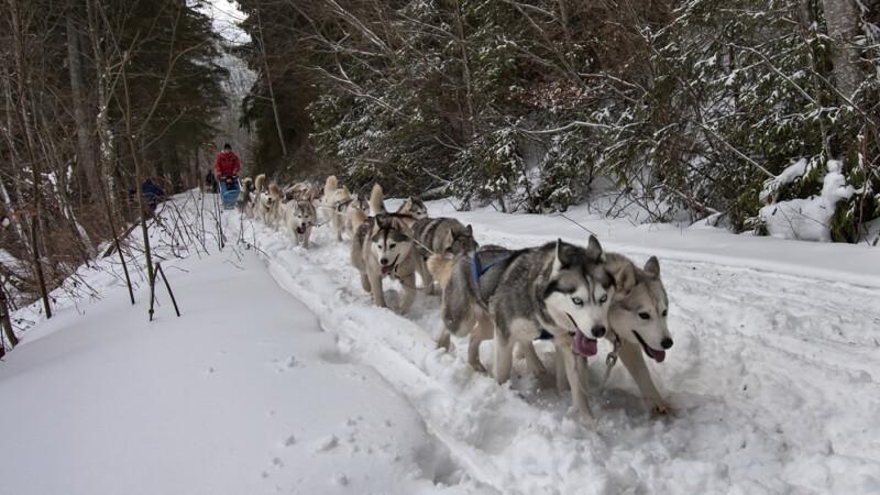 Alaska a ajuns in Romania. Un sport de iarna celebru in tarile nordice prinde teren in tara noastra