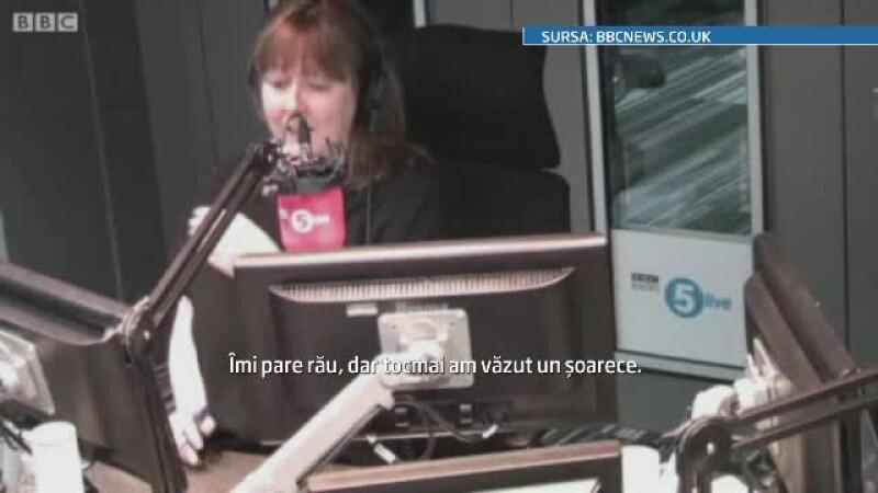 O prezentatoare radio, terifiata dupa ce a vazut un soarece in studio. A luat-o la fuga tipand.VIDEO