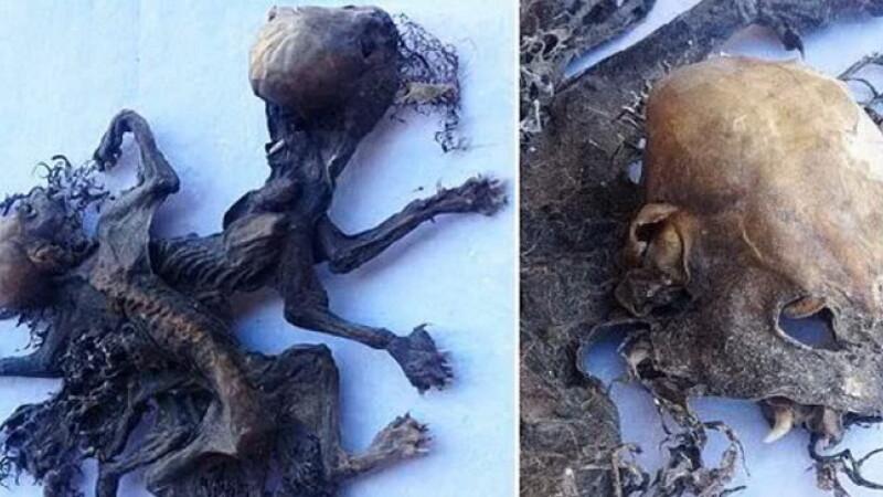 Descoperire bizara facuta de un fermier din Chile. Pot fi ramasitele unor creaturi mitice