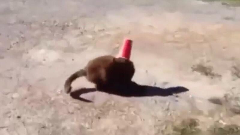 Un caine a devenit star pe internet dupa ce a salvat o pisica blocata cu capul intr-un pahar. VIDEO