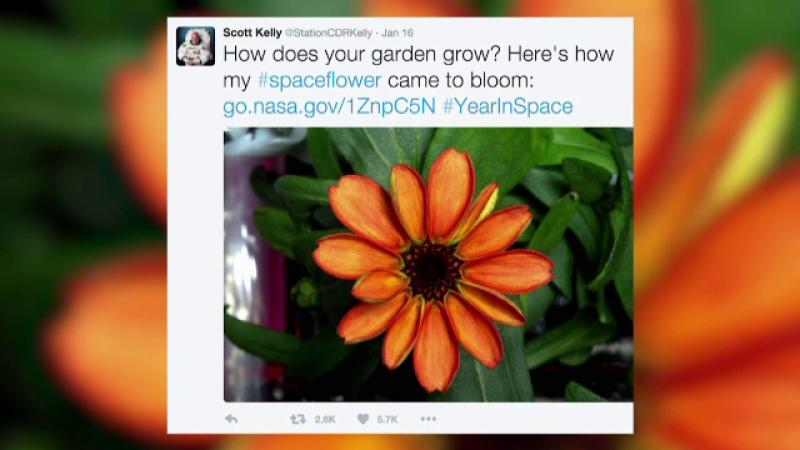 floare statie spatiala