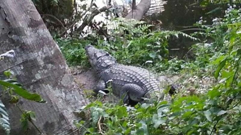 Un turist aflat într-o barcă pneumatică, ucis de un crocodil în Zimbabwe