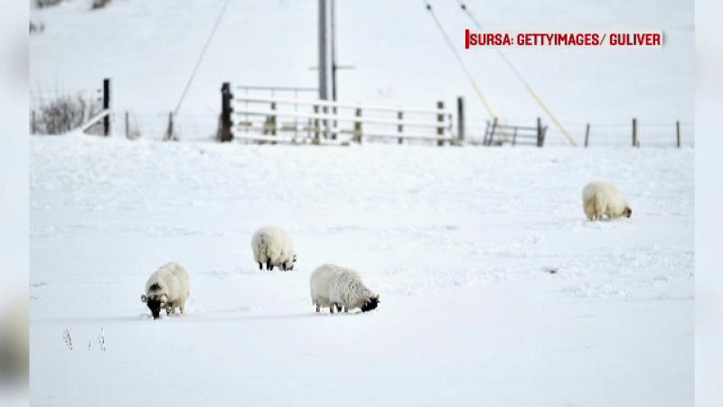 Vremea rea se muta in vestul Europei. Marea Britanie va infrunta ninsori abundente si rafale de vant de forta unui uragan