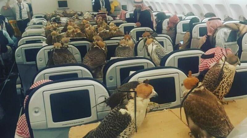 Aroganta in Orientul Mijlociu. Un print saudit si-a transportat cei 80 de soimi cu avionul. FOTO