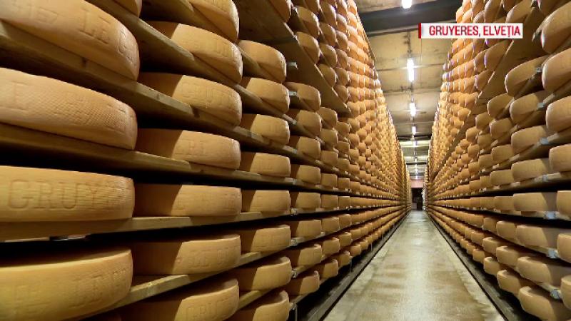 Cum se obține cea mai cerută brânză din Elveţia