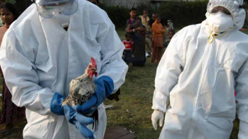 Gripa aviară, descoperită de Ungaria la o fermă din apropiere de graniţa cu România