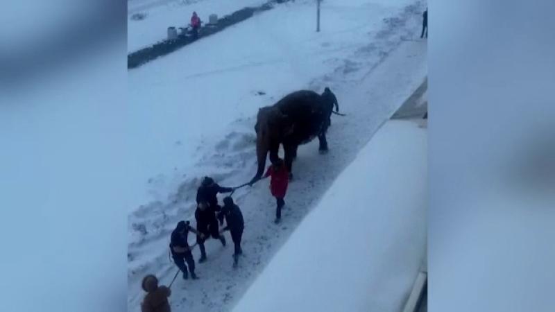 elefanti evadati