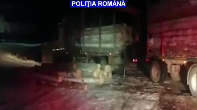 Un bărbat prins în Argeș cu un transport ilegal de lemne și-a chemat mama în ajutor. Ce a urmat