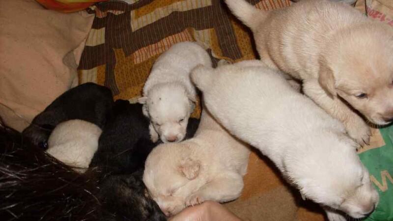 Zeci de animale fara stapan vor fi sterilizate gratuit