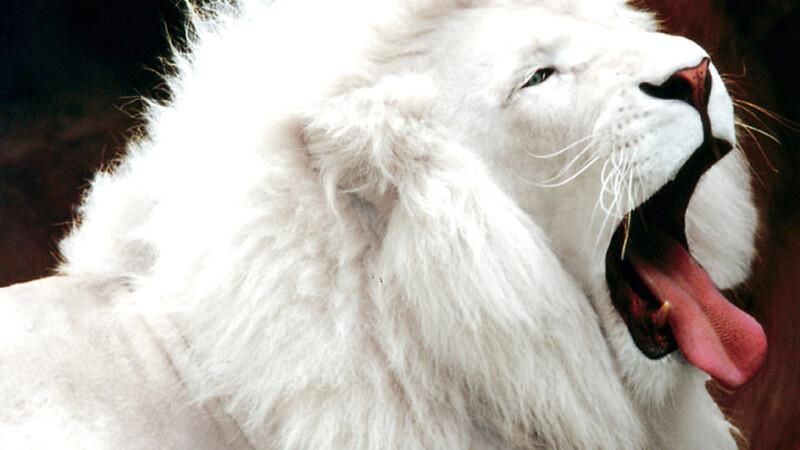 Leu alb