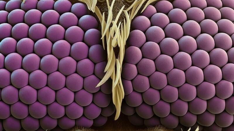 Moartea violet la microscop. Nu o sa ghiciti niciodata ce reprezinta imaginea de mai jos. FOTO